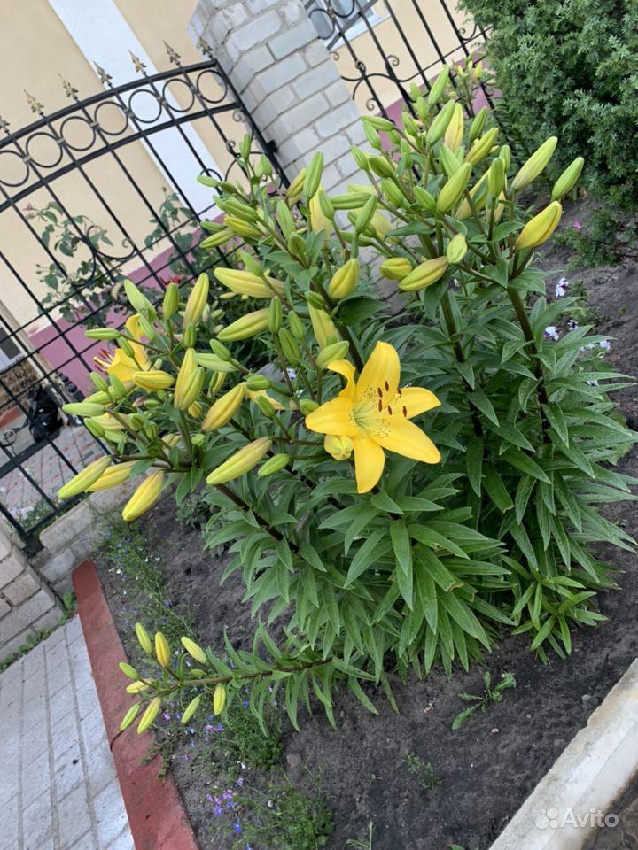 Цветы купить на Зозу.ру - фотография № 6