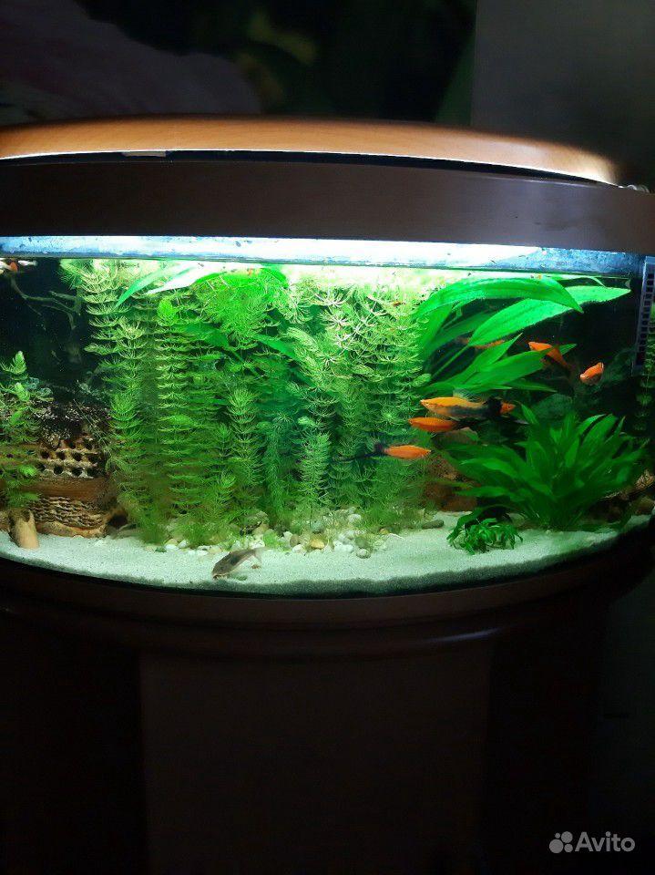 Аквариум с рыбками и тумбой купить на Зозу.ру - фотография № 1