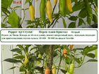 Семена острых высокорослых перцев