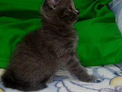 Котенок девочка рождена 8 марта