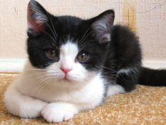 Отдам в хорошие руки очаровательных котят