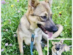 Молодая Собака -компаньон Милка в добрые руки