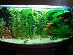 Аквариум с рыбками и тумбой
