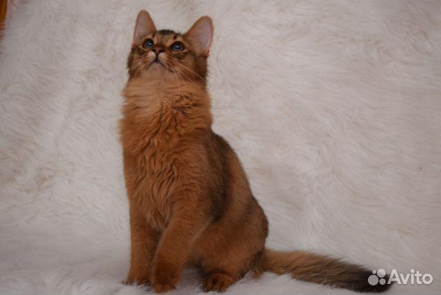 Котенка в самаре на авито