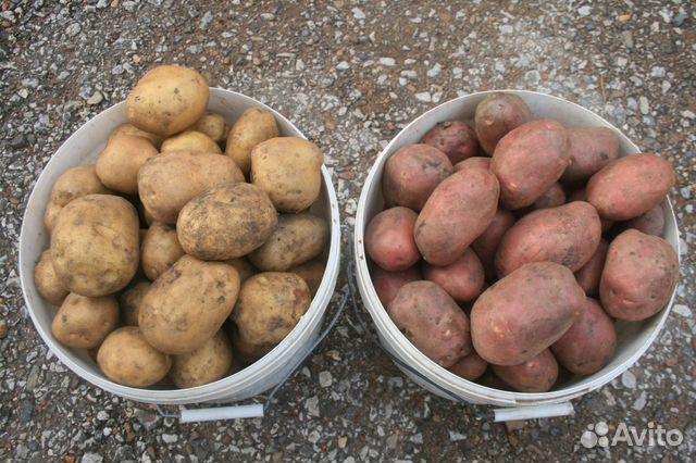 Объявления стерлитамак куплю картофель свежие вакансии уборщицы в ногинске на неполный рабочий день