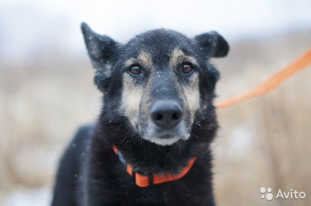 Собака с проникновенным взглядом ждет хозяина купить на Зозу.ру - фотография № 5