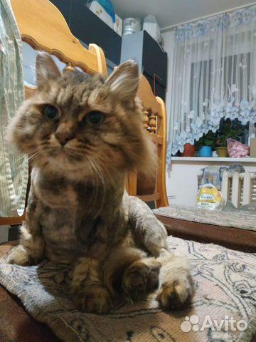 Кошечки стерелизованные