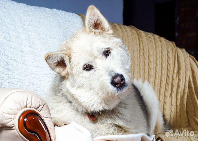Юла потрясающая девчонка Собака в добрые руки купить на Зозу.ру - фотография № 1