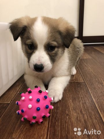Замечательный щенок в добрые руки купить на Зозу.ру - фотография № 1