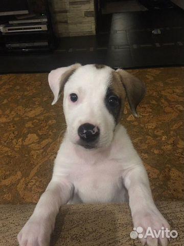 Бесплатно щенок купить на Зозу.ру - фотография № 3