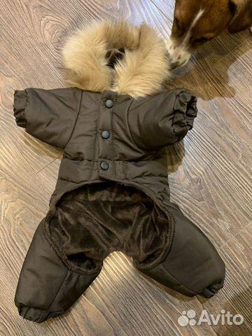 Одежда для собак 89607901901 купить 1
