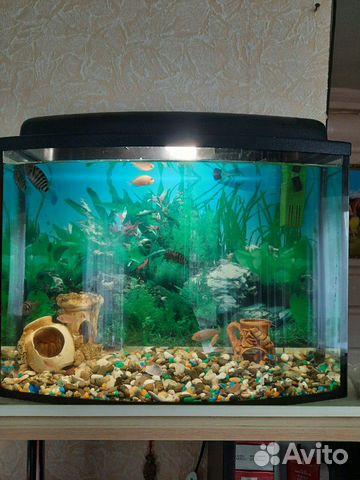 Dekoration für das Aquarium