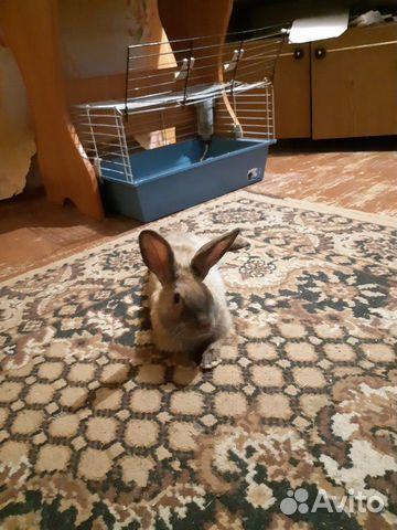 Кролик декоративный 89292032006 купить 2