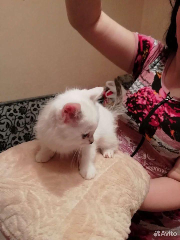 Cat  89000569955 buy 4