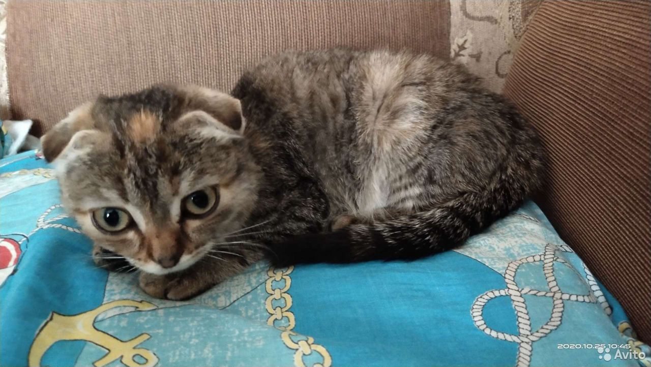 Кошка  89083193716 купить 1