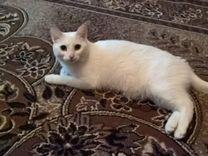 Кошка белая, метис Ангоры (в добрые руки)