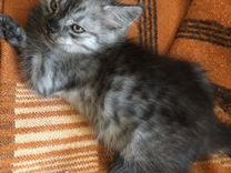Котёнок кот