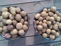 Продам картофель на корм скоту