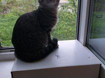 Котята 5-ть месяцев рождённые от вислоухова кота,к