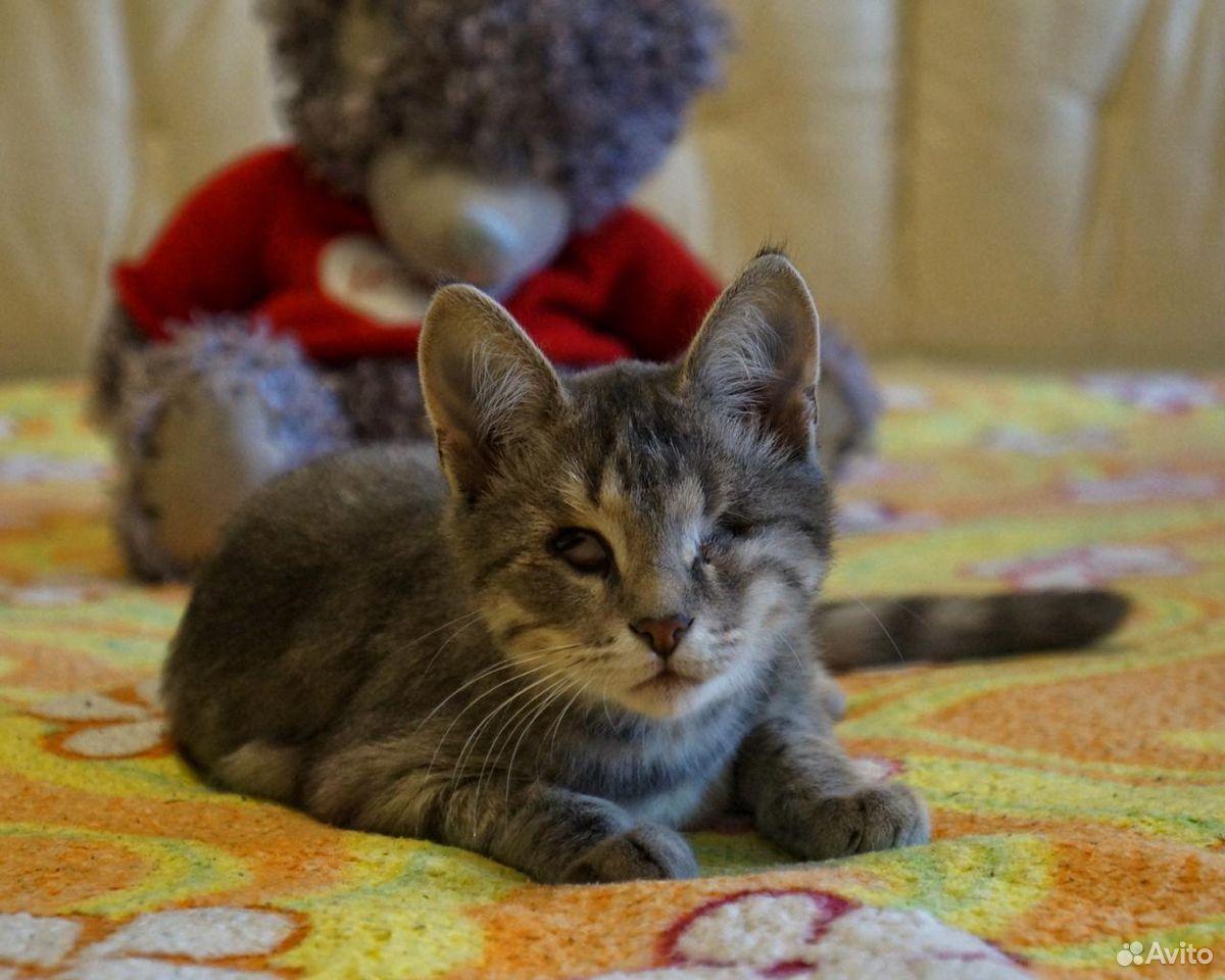 Котенок ищет дом  89533959170 купить 1