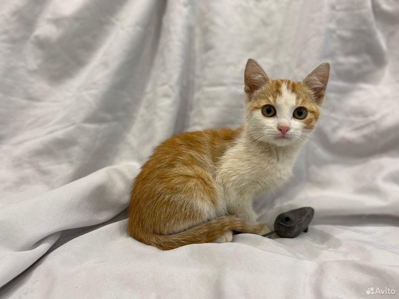 Котенок Пирожок ищет дом  89105364195 купить 2