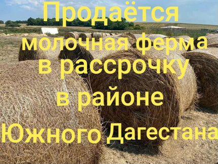 Сельское хозяйство, Республика Дагестан